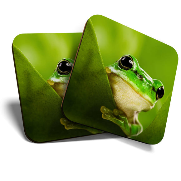 Great Coasters (Set of 2) Square / Glossy Quality Coasters / Tabletop Protection for Any Table Type - Green Tree Frog Jungle Tropical  #8229