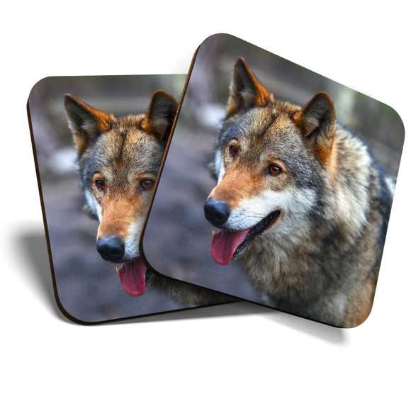 Great Coasters (Set of 2) Square / Glossy Quality Coasters / Tabletop Protection for Any Table Type - Wild Wolf Wolves Dog Animal  #8235