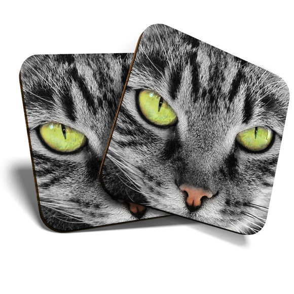 Great Coasters (Set of 2) Square / Glossy Quality Coasters / Tabletop Protection for Any Table Type - Beautiful Green Eyed Cat Kitten  #8236