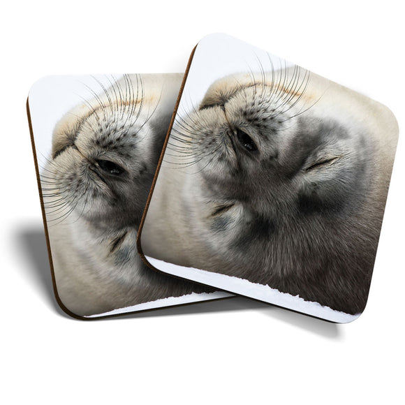 Great Coasters (Set of 2) Square / Glossy Quality Coasters / Tabletop Protection for Any Table Type - Grey Seal Pup Cute Arctic Wild  #8244