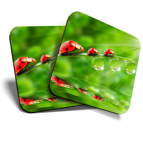 Great Coasters (Set of 2) Square / Glossy Quality Coasters / Tabletop Protection for Any Table Type - Cute Lady Bird Garden Wildlife  #8245