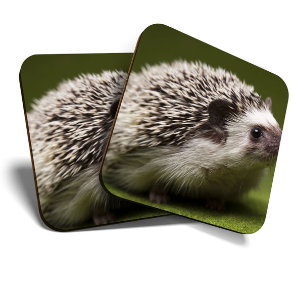 Great Coasters (Set of 2) Square / Glossy Quality Coasters / Tabletop Protection for Any Table Type - Hedgehog Garden Wildlife British  #8246