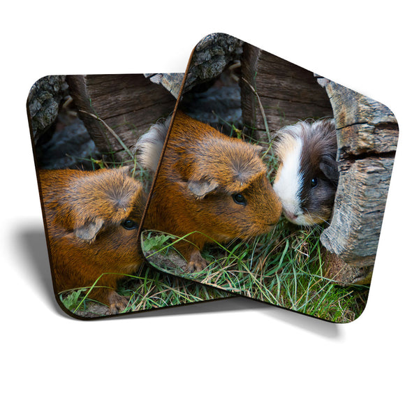Great Coasters (Set of 2) Square / Glossy Quality Coasters / Tabletop Protection for Any Table Type - Cute Guinea Pig Couple Pet Animal  #8247