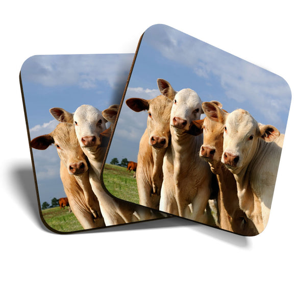 Great Coasters (Set of 2) Square / Glossy Quality Coasters / Tabletop Protection for Any Table Type - Cows Farm Animal Cattle Cow  #8249