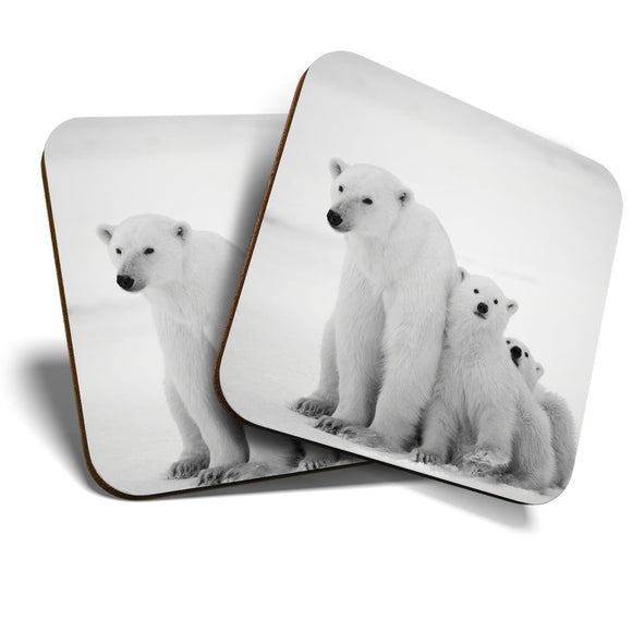 Great Coasters (Set of 2) Square / Glossy Quality Coasters / Tabletop Protection for Any Table Type - Mum & Cubs Polar Bear Baby Animal  #8250