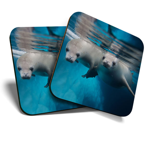Great Coasters (Set of 2) Square / Glossy Quality Coasters / Tabletop Protection for Any Table Type - Cheeky Seal Pups Ocean Diving  #8251