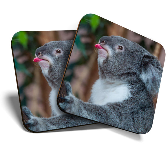 Great Coasters (Set of 2) Square / Glossy Quality Coasters / Tabletop Protection for Any Table Type - Koala Bear Australia Wild Animals  #8255