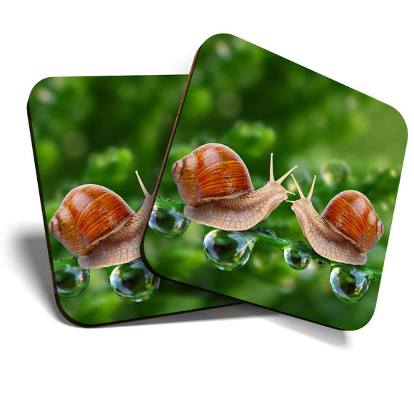 Great Coasters (Set of 2) Square / Glossy Quality Coasters / Tabletop Protection for Any Table Type - Kissing Snails Cute Kiss Snail  #8256