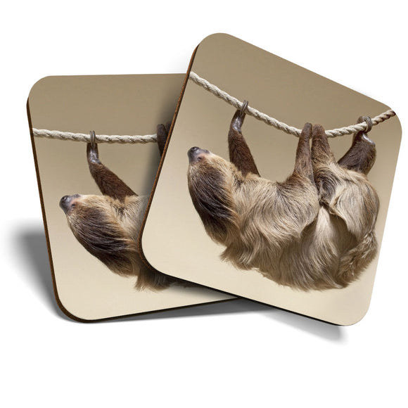 Great Coasters (Set of 2) Square / Glossy Quality Coasters / Tabletop Protection for Any Table Type - Cute Climbing Lazy Sloth Animal  #8257
