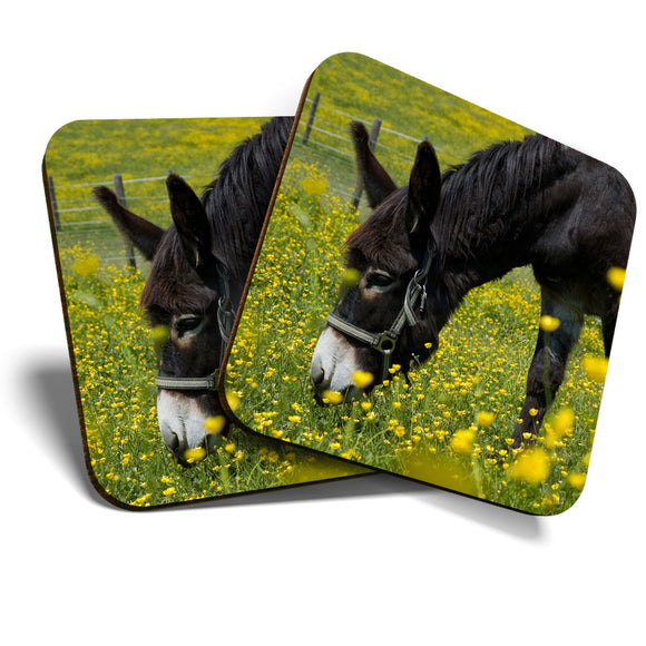 Great Coasters (Set of 2) Square / Glossy Quality Coasters / Tabletop Protection for Any Table Type - Little Cute Donkey Horse Animals Cool  #8259