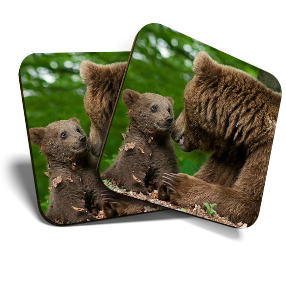 Great Coasters (Set of 2) Square / Glossy Quality Coasters / Tabletop Protection for Any Table Type - Mother Bear & Cub Baby Animals Cute  #8261