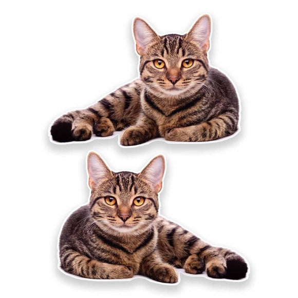 2 x Cat Vinyl Sticker #9639