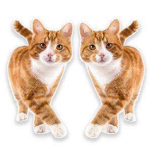 2 x Ginger Cat Vinyl Sticker #9640