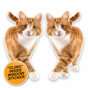 2 x Ginger Cat WINDOW CLING STICKER Car Van Campervan Glass #9640