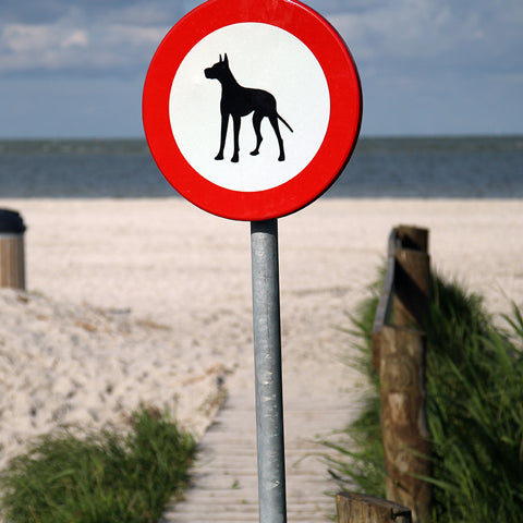 dogs allowed on beach sign