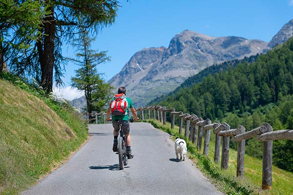 biking with dog off leash in the mountains