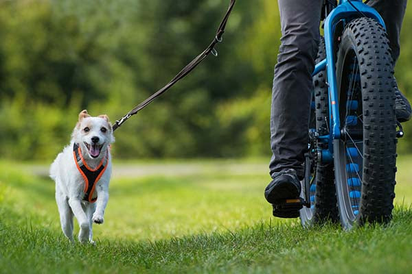 biking with dog running in grass on harness and leash.jpg