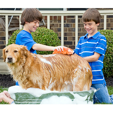 boys giving dog a bath outside in summer