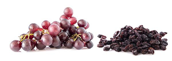 dogs should not eat grapes and raisins.jpg