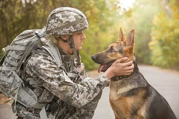german-shepherd-with-soldier-military-ChewdUp