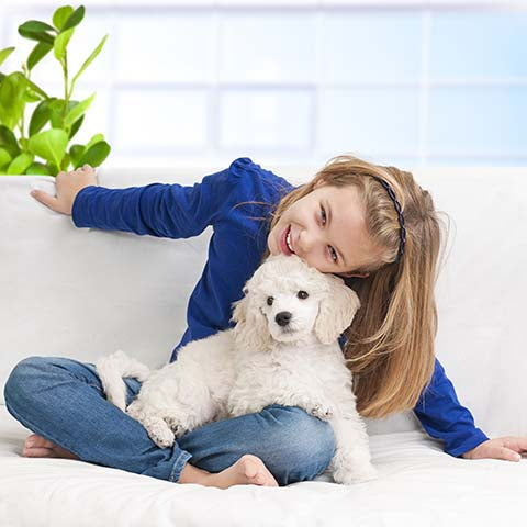 poodle with girl