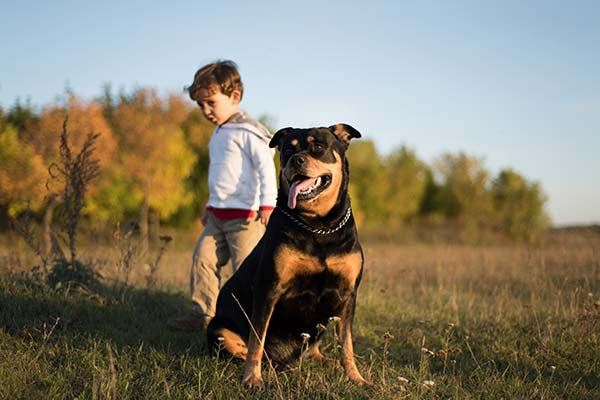 rottweiler with boy outside in nature
