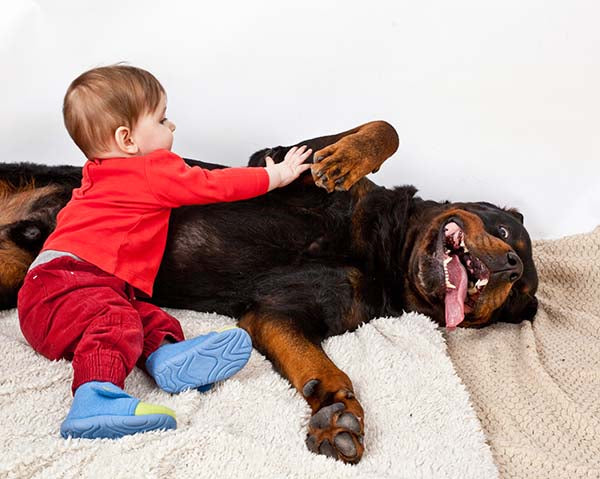 rottie with small child