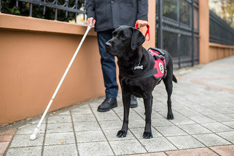 service dog assisting blind person