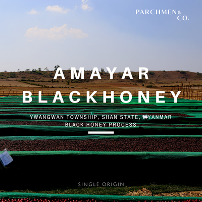 Amayar Myanmar Black Honey [Green Beans]