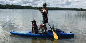 SUP Pup!  Tips for paddle boarding with your dog