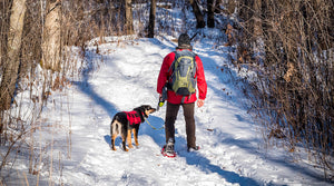 15 Best Places To Go Snowshoeing In the Twin Cities