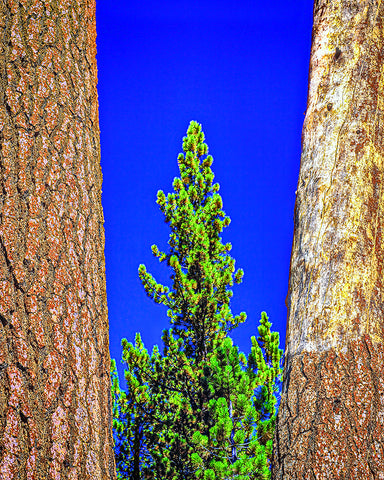 Three Trees Vertical Metal Print