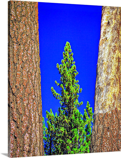 Three Trees Vertical Canvas
