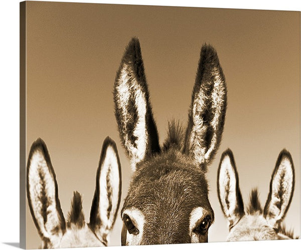 All Ears Sepia Canvas