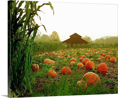 Autumn Harvest Canvas