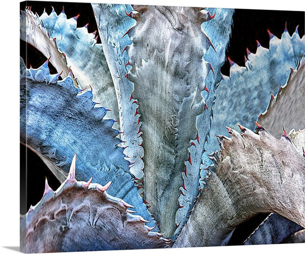 Blue Agave Canvas