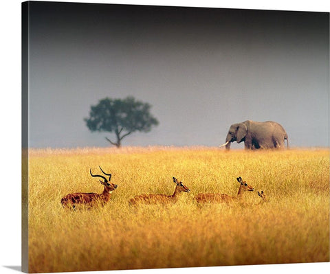 Elephant and Impala Canvas