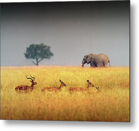 Elephant and Impala Metal Print