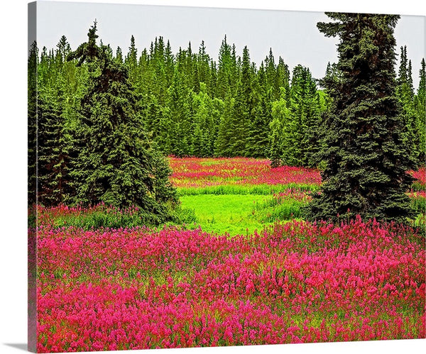 Fireweed Alaska Canvas