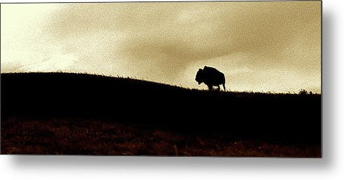 Lone Buffalo Panoramic Metal Print