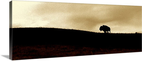Lone Buffalo Panoramic Canvas