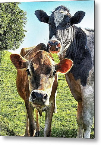 Mom and Calf Metal Print