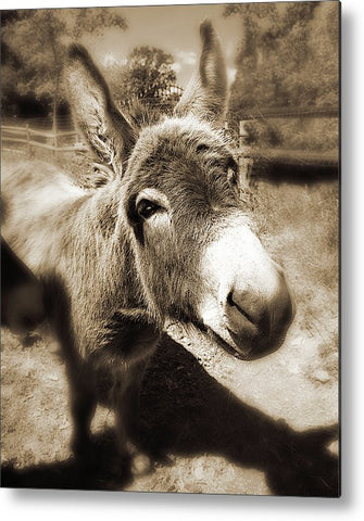 Need Another Scratch Sepia Metal Print
