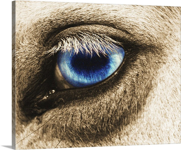 Ole Blue Eye Canvas