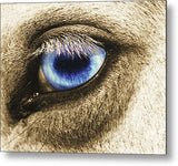 Ole Blue Eye Metal Print