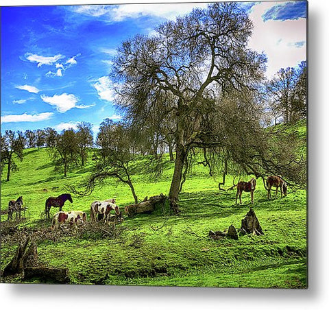 Perfect Afternoon Metal Print