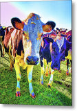 Show Me Your Moo Moo Metal Print