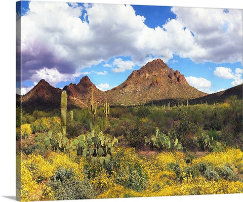 Sonoran Desert Springtime Canvas