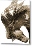 Stallion Hair Spray Metal Print