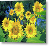Sunflowers, The Happy Flower Metal Print